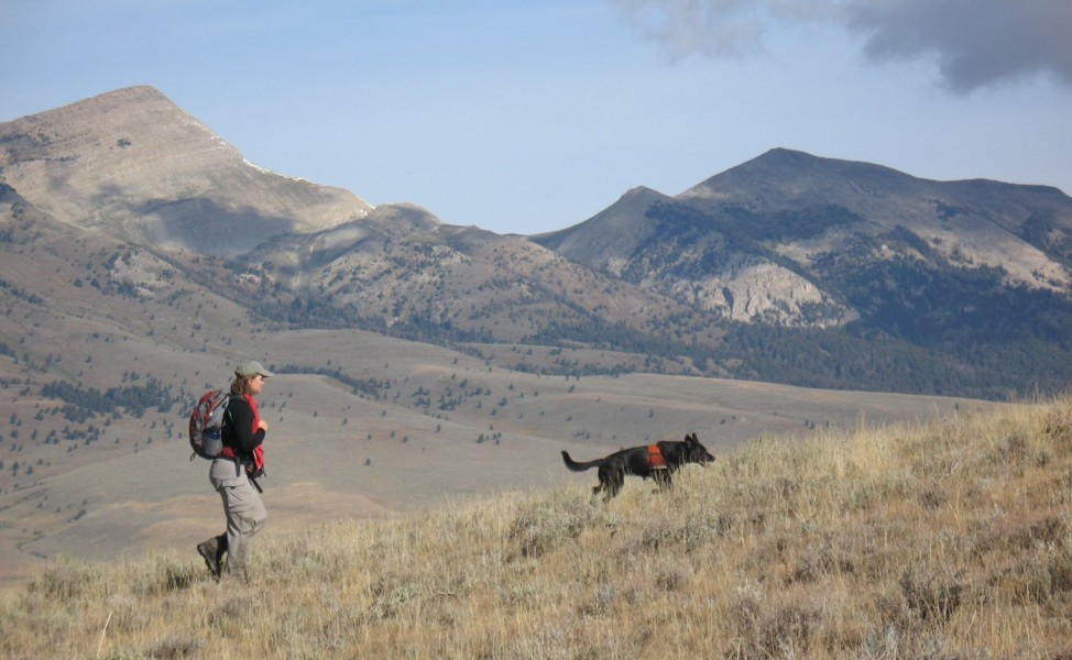 Carly & Camas look for black-footed ferret in Colorado