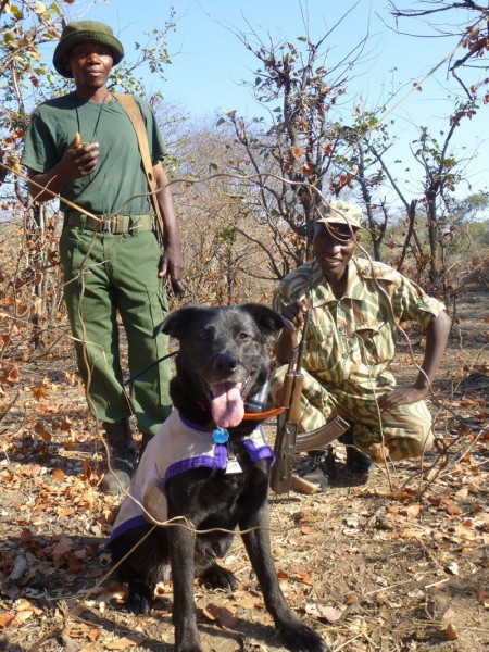 Wicket in Zambia with a wire snare he has found.
