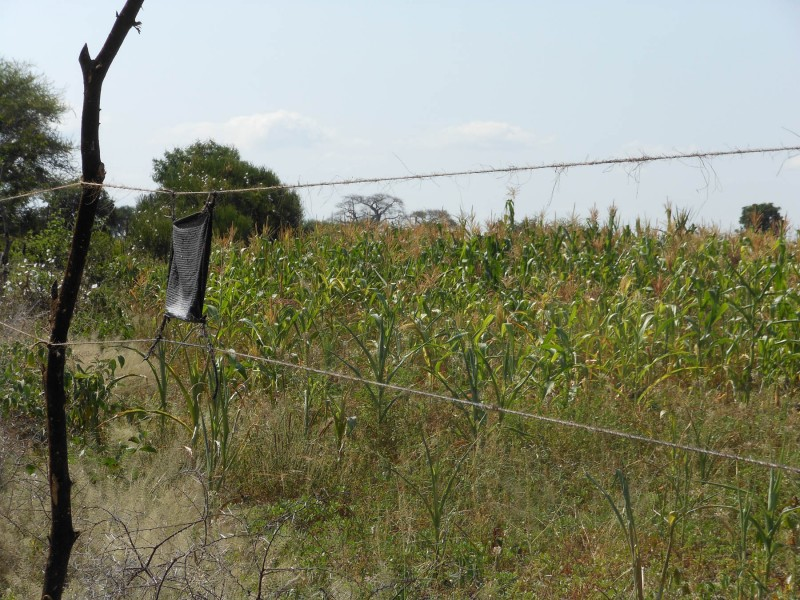 A chile fence designed to deter elephants with its pungent smell.