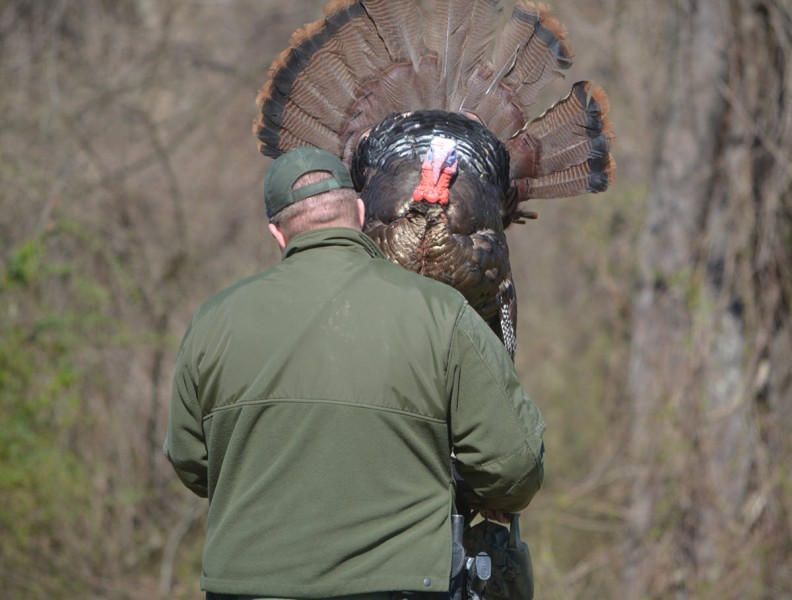 Maryland Natural Resources Police (NRP) Corporal Joshua Keeney deploys a robo-turkey in Baltimore County before spring turkey season this April. Photo credit: NRP.