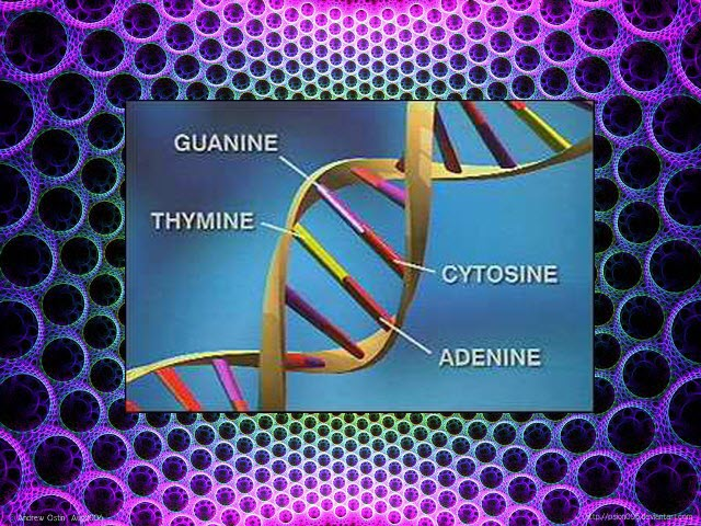DNA-Gene with 4 bases_WikiSummarizer dot blogspot dot com