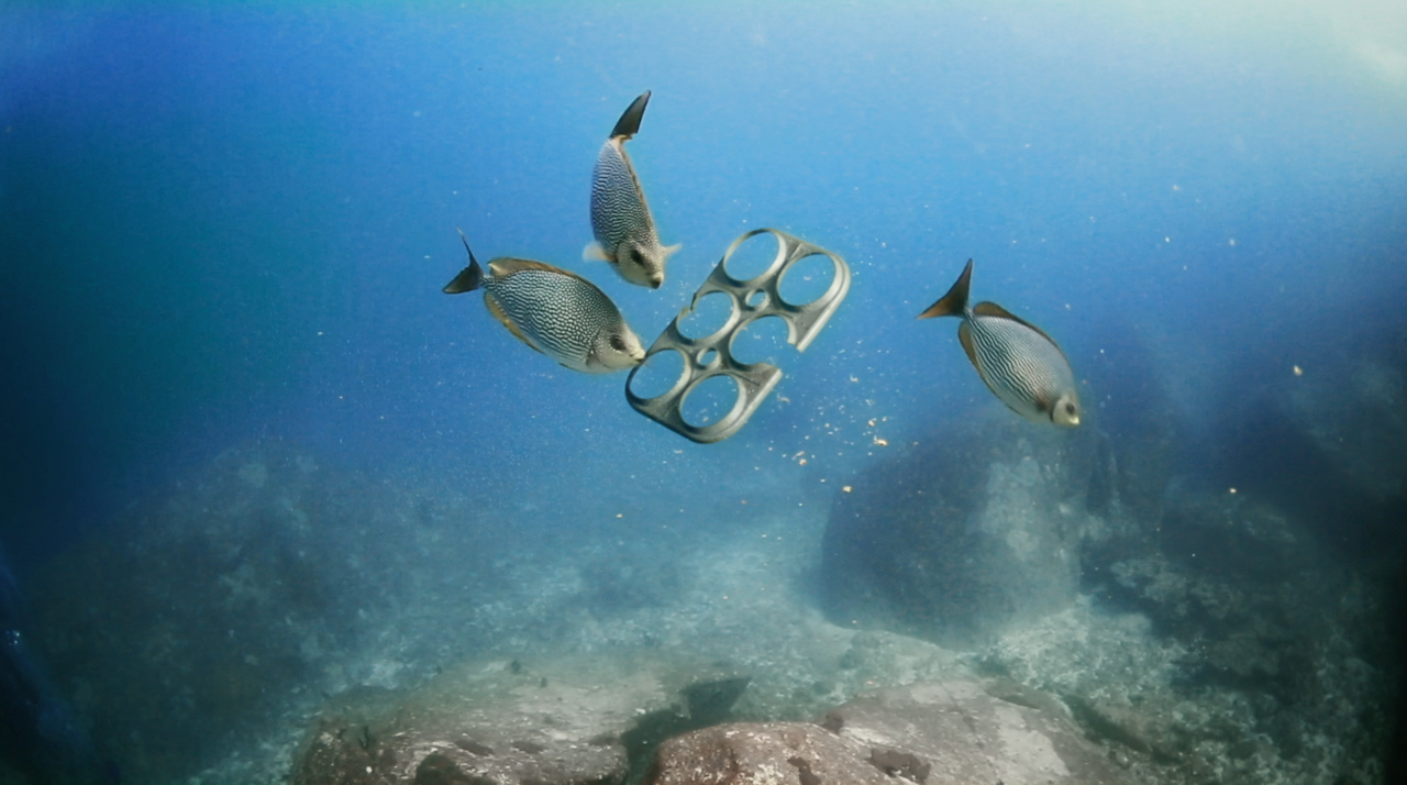 These six-pack rings feed fish, turtles and seabirds instead of entangling, choking, poisoning or killing them as plastic ones do, and could thereby save hundreds of thousands of marine lives. Photo credit: We Believers and Saltwater Brewery.