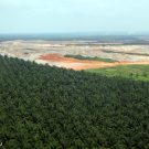 Oil-palm estate in Sabah, Malaysia. Photo by Rhett A. Butler.