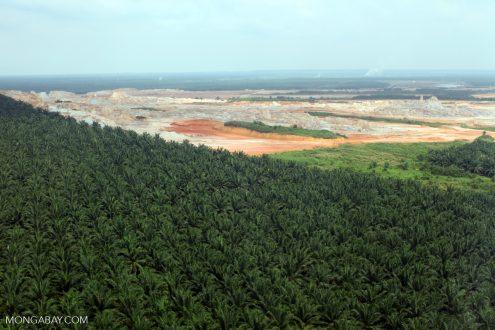 Oil-palm estate in Sabah, Malaysia. Photo by Rhett A. Butler.