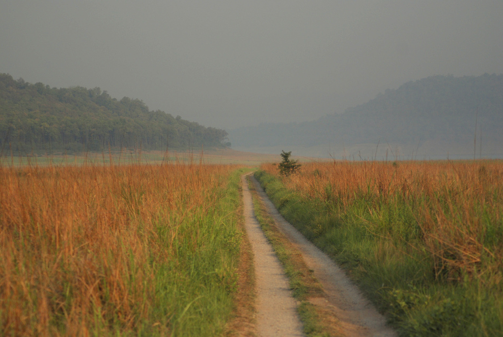 According to experts, e-Eye will be most useful and cost-effective in open grasslands, such as this landscape in Corbett cut by a trail into the reserve. Photo credit: Ekabishek.