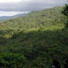 Penas Blancas Forest, Costa Rica