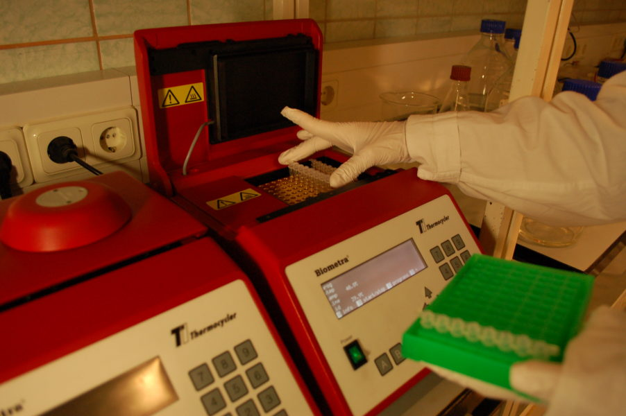 Researcher placing a strip of eight PCR tubes into thermal cycler. Photo credit: Karl Mumm.