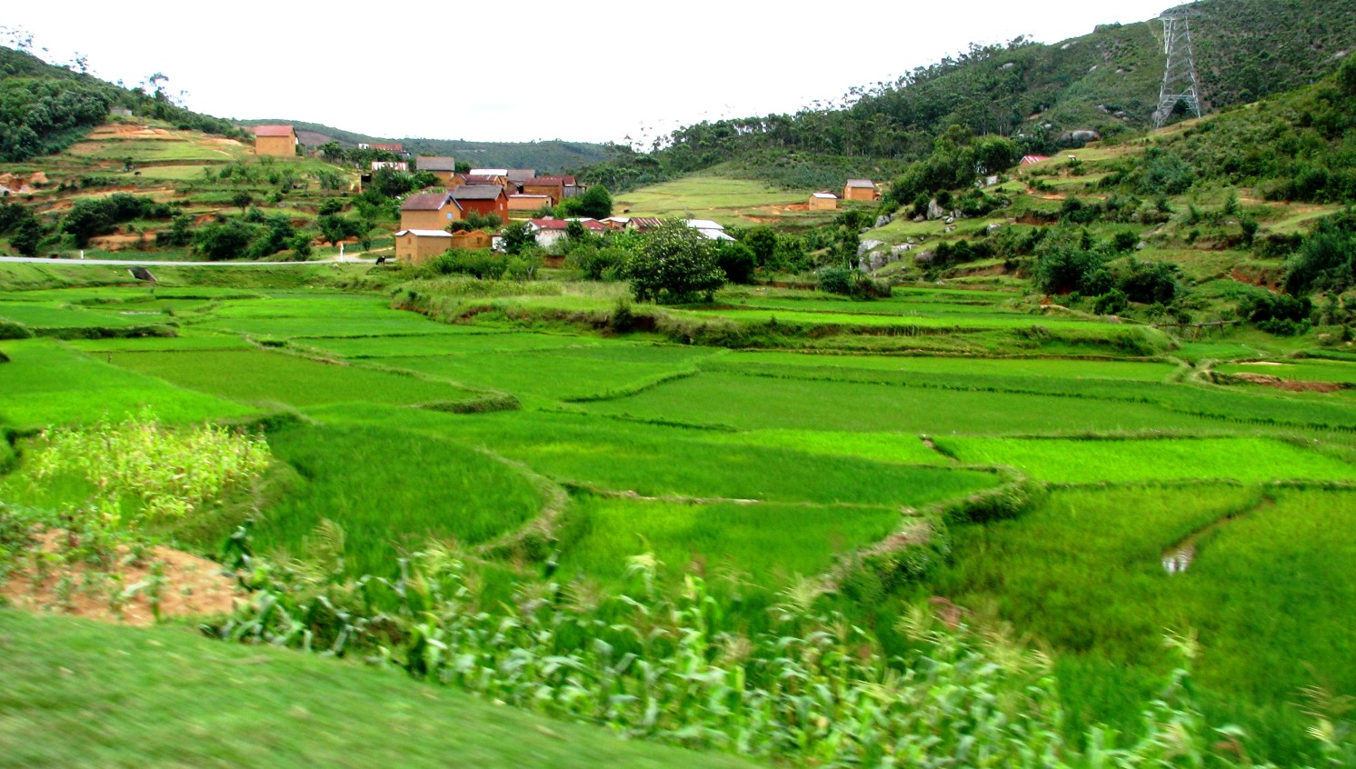 Rice paddy fields near Madagascar's