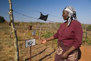 Farmer reviewing a chili fence demonstration