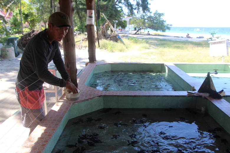 "Abdul ""Bolong"" Hanan feeds baby green sea turtles at his turtle sanctuary in Lombok, Indonesia. His small project has helped increase the local population of the species. Photo by Melati Kaye."