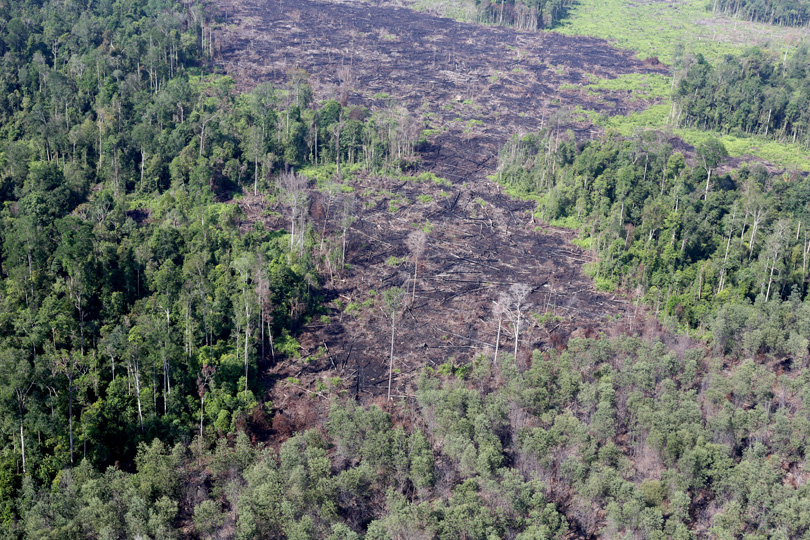 Burned forest in Riau's Tesso Nilo, Indonesia. Photo by Rhett A. Butler