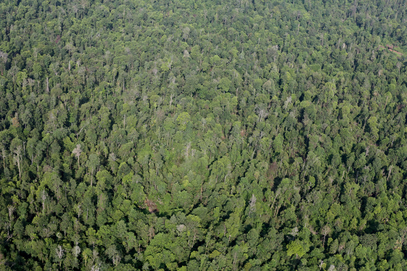 Rainforest in Riau, Indonesia. Photo by Rhett A. Butler