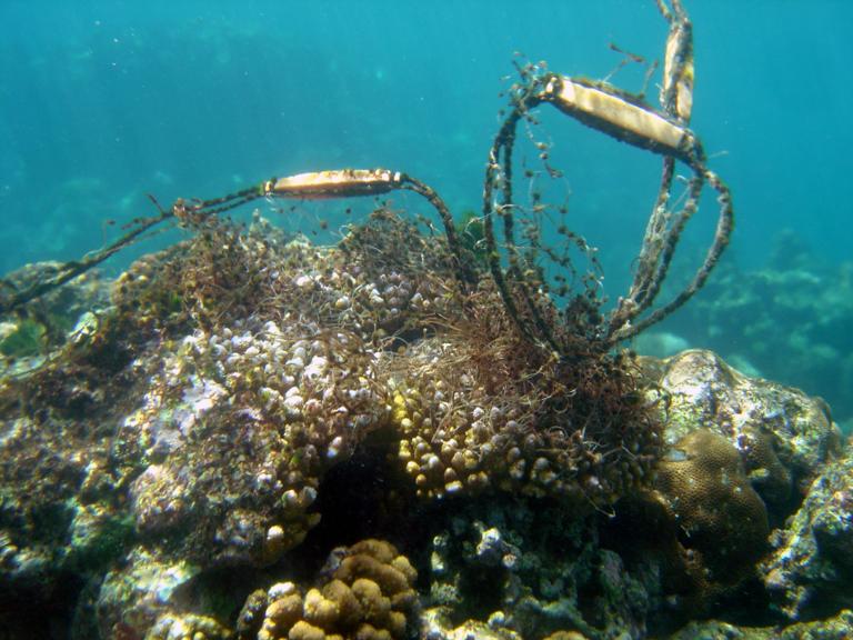 Discarded fishing gear tangles a reef. Photo credit: David Burdick / NOAA.