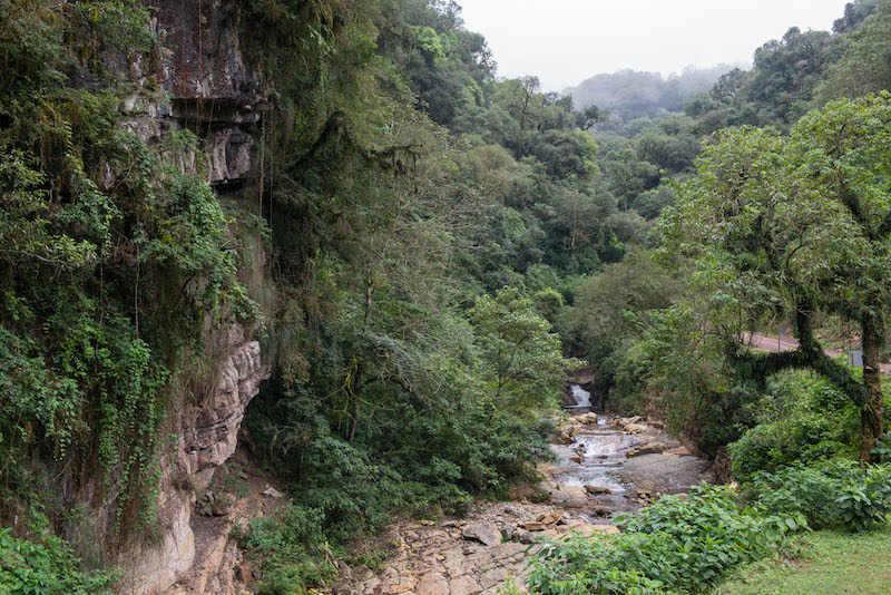 Calilegua National Park contains large tracts of pristine rainforest. Photo courtesy of Greenpeace.