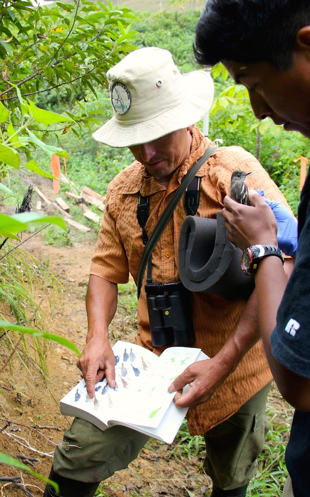 William Ferrufino and ornithologist Víctor Hugo García Solíz figure out the species of a flycatcher they caught in mist nets. Photo by Morgan Erickson-Davis.