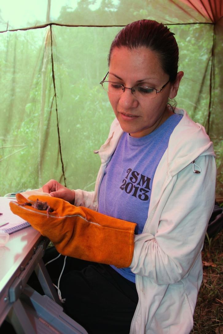 Biologist Lizette Siles Mendoza examines a vampire bat she caught the previous night. Photo by Morgan Erickson-Davis.