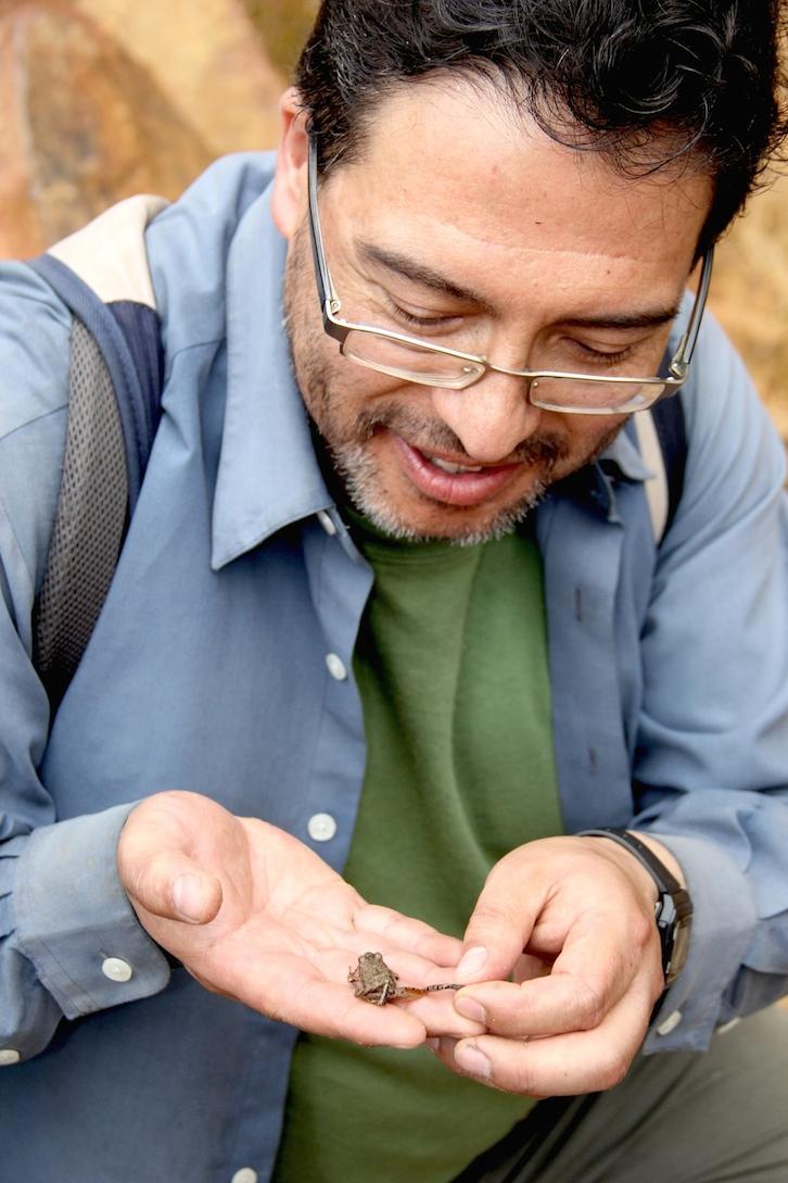 James Aparicio shows the diagnostic orange legs of the new Oreobates frog. Photo by Morgan Erickson-Davis.