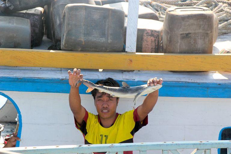 At Tanjung Luar port, Lombok, a shark longline vessel crewman holds up a juvenile shark that was caught as bycatch. Photo credit: Melati Kaye.