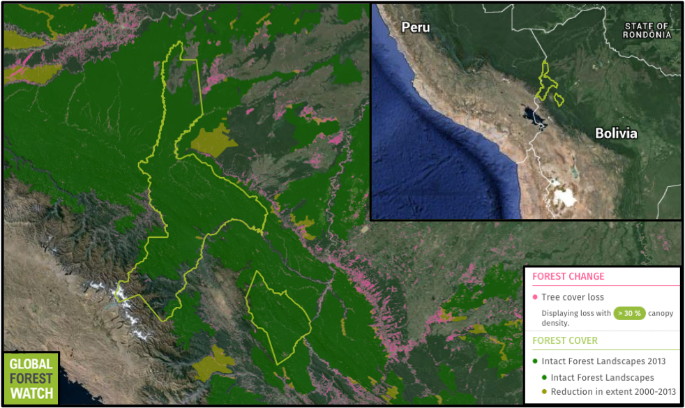 Madidi National Park covers nearly 19,000 square kilometers near northern Bolivia's border with Peru. Mostly intact, the area's designation as a national park helps protect it from the higher levels of deforestation outside its boundaries. The area between the park's two halves is designated as a Integrated Management Natural Area.