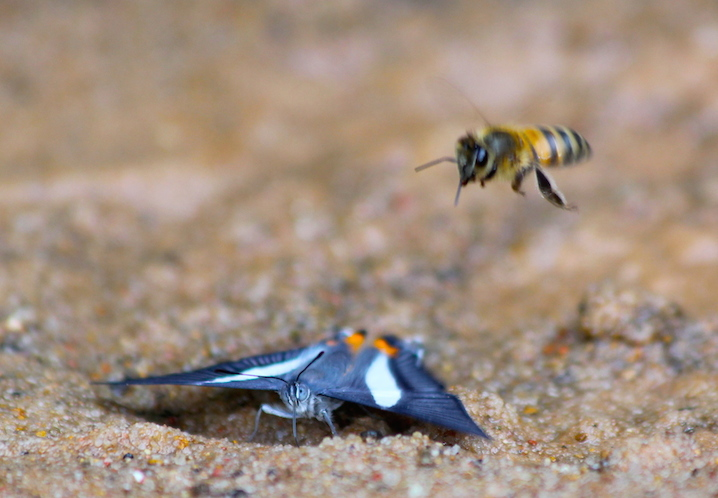 Butterflies and bees abound in areas where salt is present. Photo by Morgan Erickson-Davis.