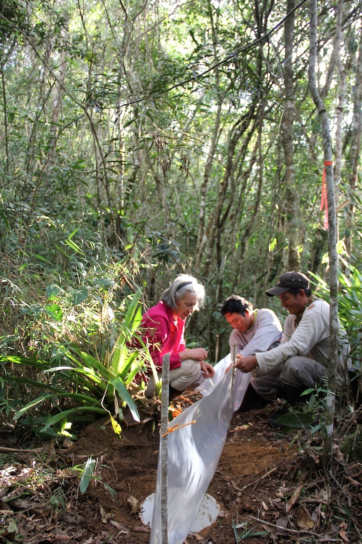 Nuria and her team set pitfall bucket traps in the hopes of catching some small mammals. Photo by Morgan Erickson-Davis.