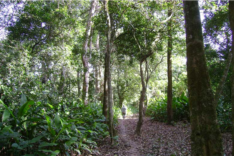 A man walks on a forest trail in Isiboro Sécure National Park an Indigenous Territory, part of TIPNIS, in 2007. Photo credit: Fernando Locatelli,  creative commons 3.0 license via Wikimedia Commons.