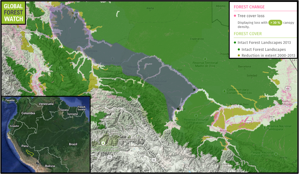The estimated range of the  Urubamba brown titi monkey (Callicebus urubambensis) consists mostly of intact primary forest. However, Global Forest Watch shows some degradation has occurred in its range since 2000, and extensive mining activity has occurred nearby (bottom right corner of the map).