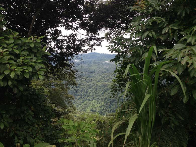 Ecuadorian Rainforest on the road to Lago Agrio. Photo credit: Veronica Goyzueta.