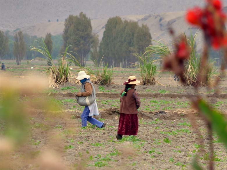 Farm workers in a field not far from the proposed Tia Maria mine site. Photo by Justin Catanoso.