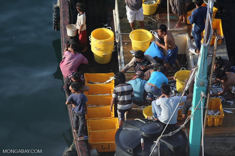 Sorting fish on a Malaysian fishing boat. Photo credit: Rhett Butler.