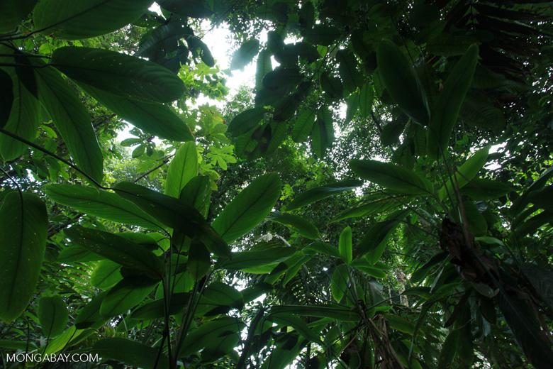 Cu ntos rboles son talados al a o for Cuanto miden los arboles
