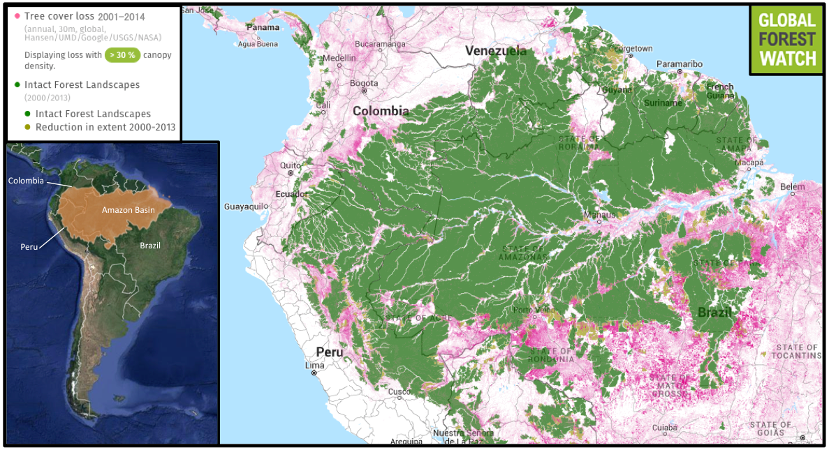 Global Forest Watch shows the Amazon Basin lost approximately 16.4 million hectares -- nearly 4 percent -- of its tree cover from 2001 through 2014. While large, relatively untouched areas of primary forest (Intact Forest Landscapes) still cover much of the region, significant degradation has occurred since 2000, particularly in the southern states of Rondônia, Mato Grosso, and Pará.