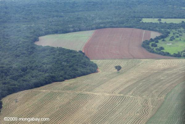 Selva amazónica deforestada para la cría de ganado, Brasil. Foto de Rhett Butler.