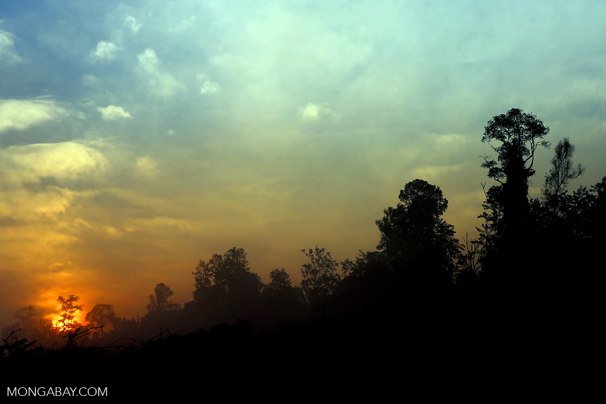 Sunset over a deforested area in Sumatra, Indonesia. Photo by Rhett A. Butler.