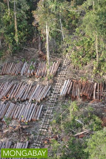 Stacks of rainforest timber in Indonesia. Photo by Rhett Butler