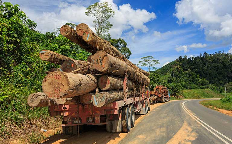 Logging, as seen here in Sabah Malaysia, is a major cause of tropical deforestation, along with agriculture, mineral extraction and dam construction.