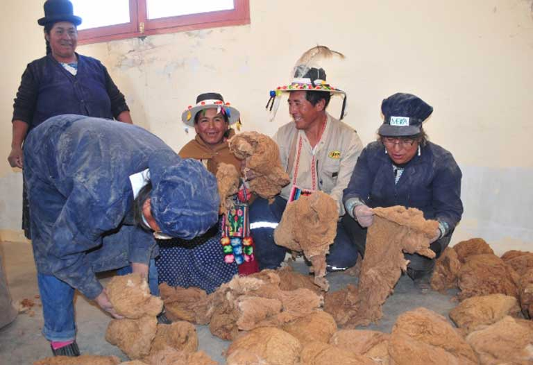 Oruro community members selling legally harvested vicuña fiber. Photo by Daniel Maydana