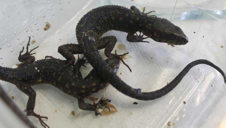Animals from the Maciej Oskroba trafficking bust, courtesy of the Costa Rican Public Security Ministry