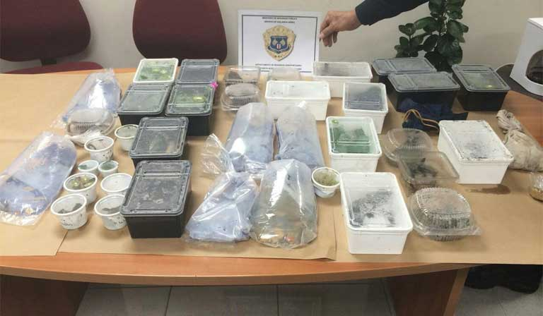German tourist Maciej Oskroba was caught smuggling 400 live snakes, frogs and lizards stuffed into poorly ventilated plastic food containers. Courtesy of the Costa Rican Public Security Ministry.