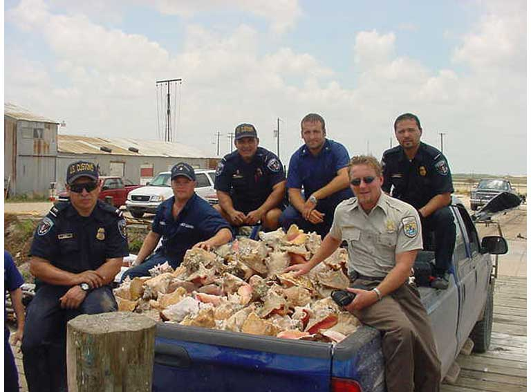 Brownsville, Texas, queen conch seizure. Photo courtesy of USFWS