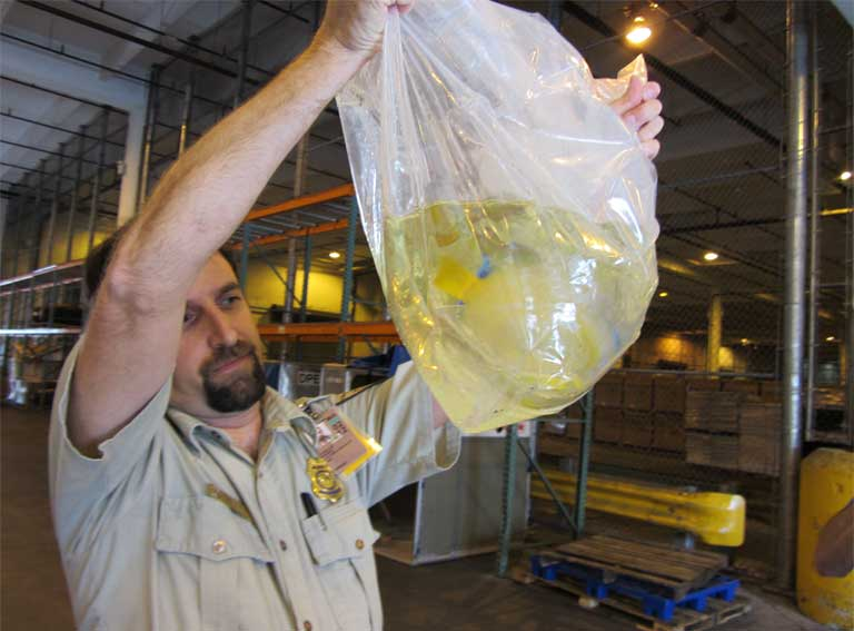 A US Fish and Wildlife Service inspection of imported tropical fish from Brazil. Photo courtesy of USFWS