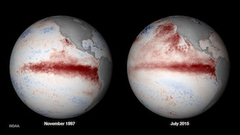 Pacific Ocean sea surface temperature anomalies during the last major El Niño in 1997 and in 2015. Image courtesy of NOAA Climate Prediction Center.