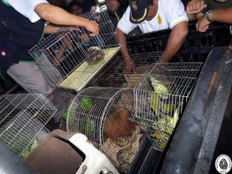 Rescued animals on their way out of the market after one of four raids conducted by authorities and assisted by NPC in 2014. No arrests of vendors were made. Photo courtesy of NPC