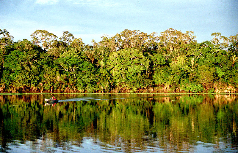 800px-Amazonia Photo by Andre Deak licensed under the Creative Commons Attribution 2.0 Generic license.