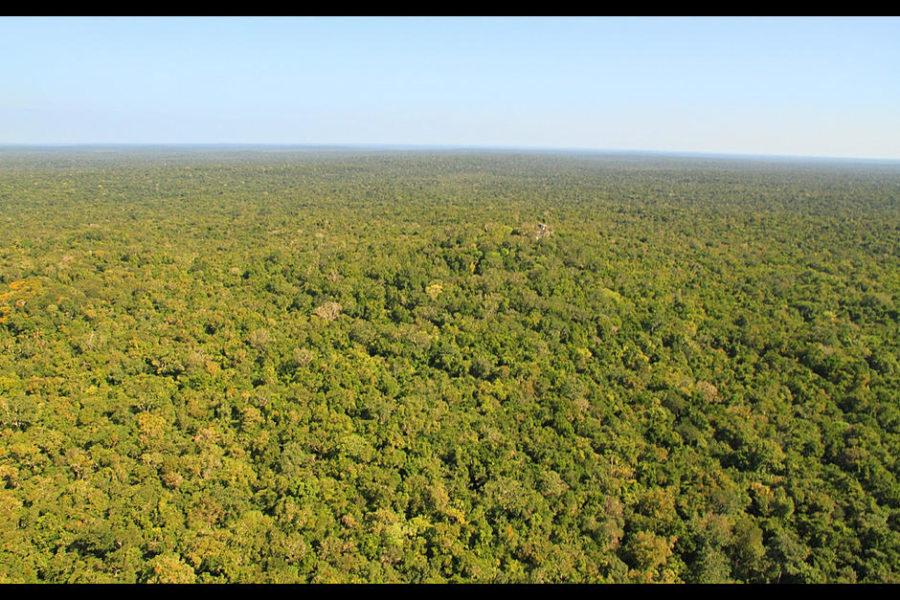 La Selva Maya incorporará bosques contínuos en Guatemala, México y Belice. Foto cortesía de CONAP.