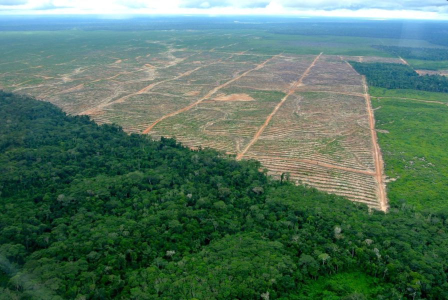 Peru Ucayali Rodung Palmöl Primärwald Melka Luftbild