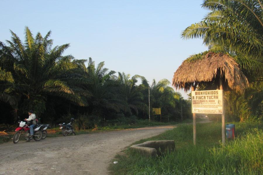 En Petén los cultivos de palma africana se expanden por más de 250 kilómetros cuadrados. Foto cortesía de Carlos Chávez.