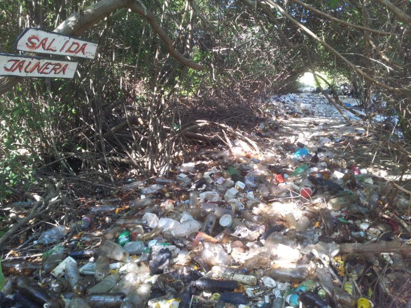 Los manglares en las riberas del Lago, sala de parto y refugio de peces, moluscos y mariscos, están contaminados por derrames y basura plástica en la comunidad indígena de Capitán Chico, en Maracaibo. Foto cortesía de Jeanfreddy Gutiérrez.