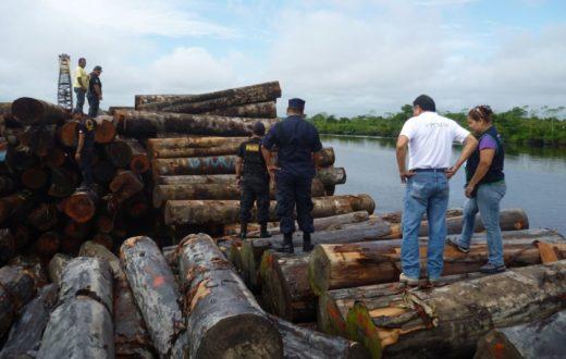 El comercio o tráfico de madera ilegal es considerado como crimen organizado. Foto: Agencia Andina.