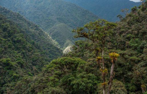 """Perú tiene un gran potencial para la conservación de carbono en sus bosques. En la fotografía se encuentra el área de conservación privada """"Bosques Montanos y Páramos Chicuate-Chinguelas"""". Fotografía: Naturaleza y cultura."""